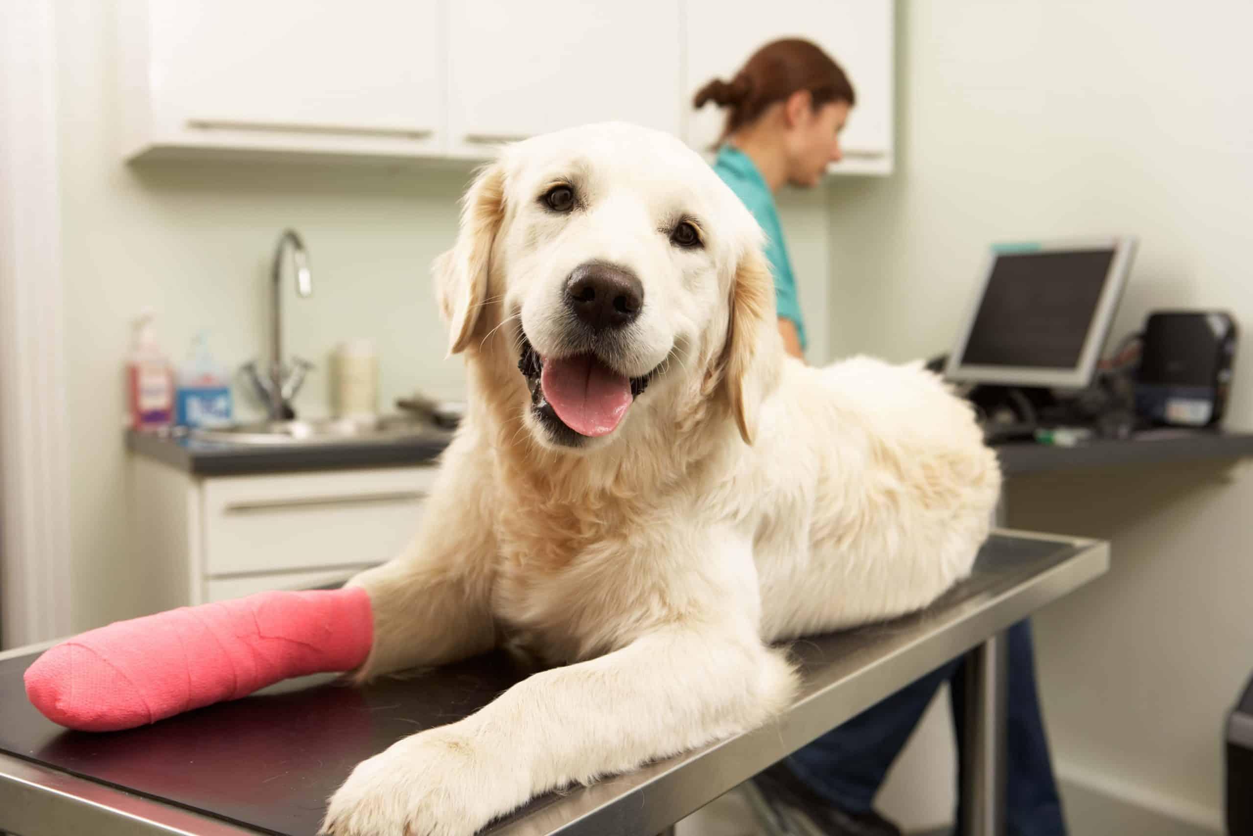 ביטוח לכלב